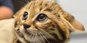تعرفي على فوبيا القطط وأسبابها
